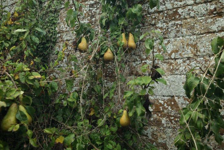 glendon-pears-wall