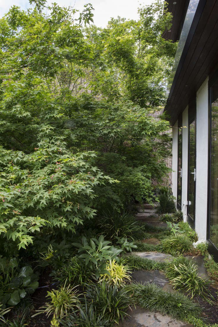 The side of the house is planted with Berberus Vulgaris, Phlomis Fruiticosa, Sedum autumn joy, and Acer Palmatum.