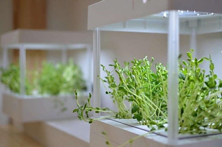 grow-farm-grow-lights-japan-gardenista
