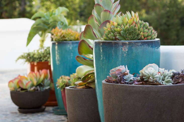 The aqua glazed pots are also available from Potted.