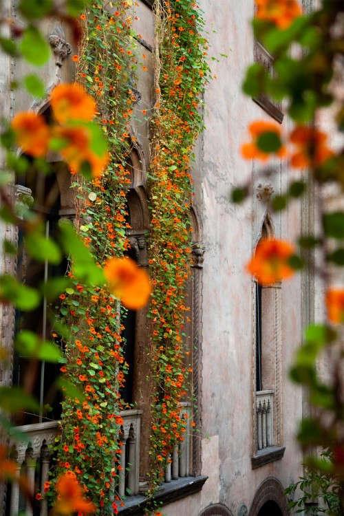 hanging-nasturtiums-siena-scarf-isabella-stewart-gardener-museum-gardenista