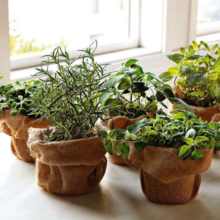 herbs-lemon-thyme-gardenista