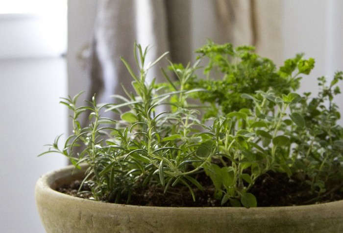 See step-by-step tips for planting your own indoor herb garden at Small Space DIY: Countertop Herb Garden. Photograph by Erin Boyle.