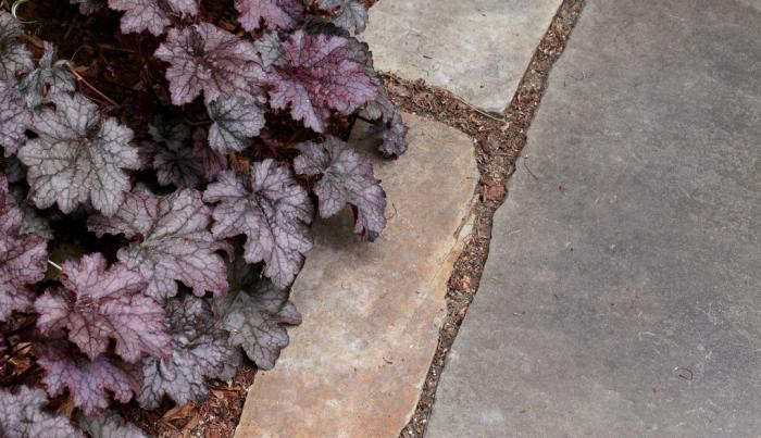 heuchera-coral-bells-edge-path-gardenista