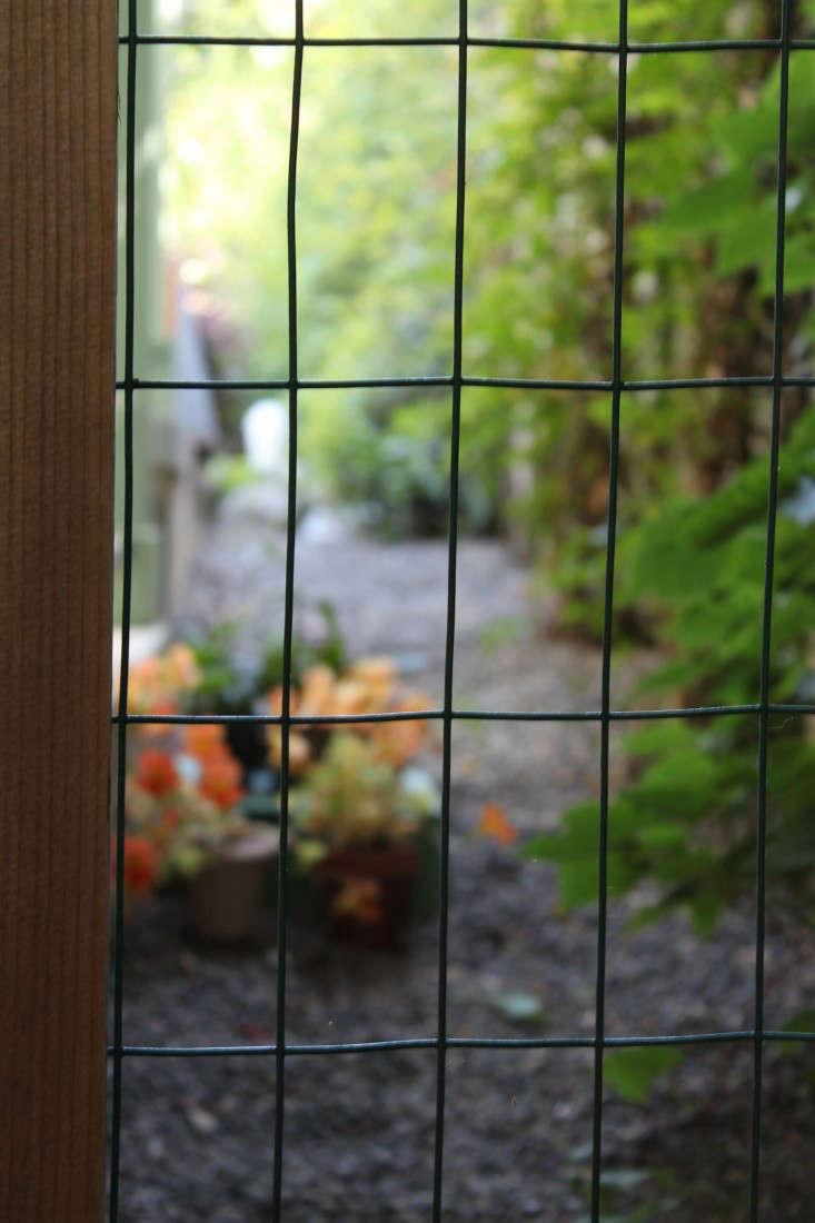 hog wire fence in garden by michelle slatalla