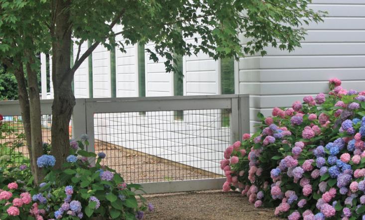 hog wire fence hydrangeas kettelkamp project