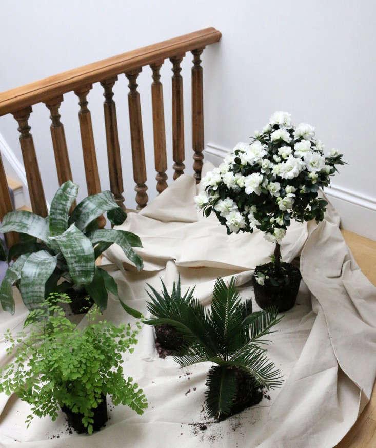 houseplants-history-3-erin-boyle-gardenista