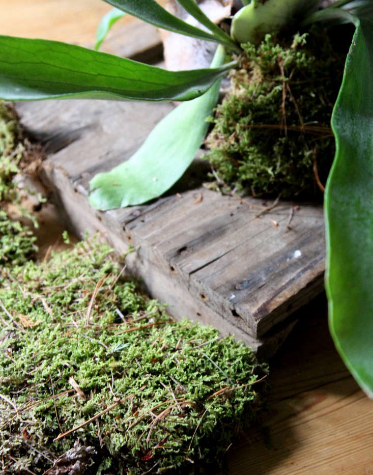 Use sheet moss as a green backdrop.