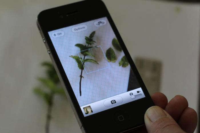 iphone-app-leafsnap-gardenista