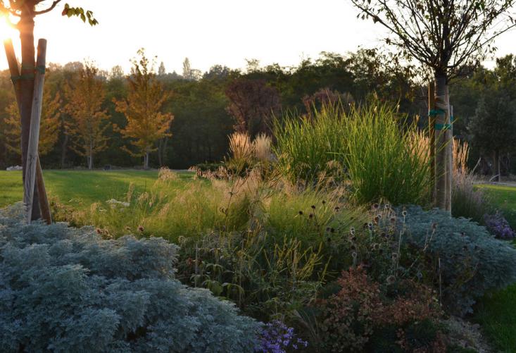 italy-cristiana-ruspa-garden-perennial-beds-artemesia-lawn-gardenista
