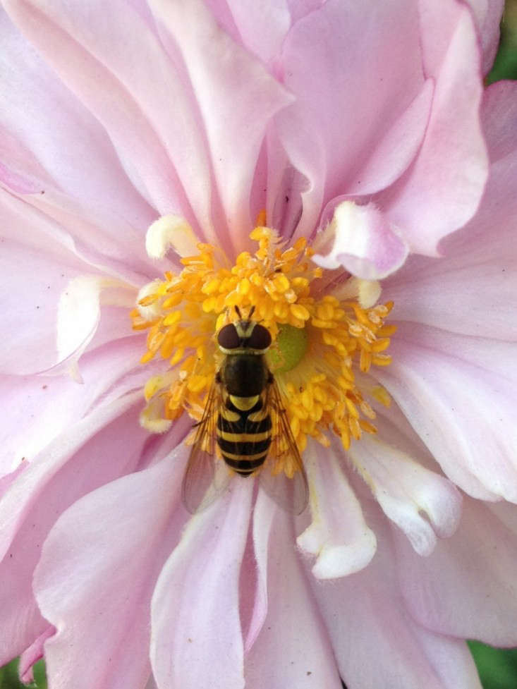 If you have fruit trees, berry bushes, or vegetables, you need pollinators to produce a harvest. When planting flowers, choose varieties bees can&#8