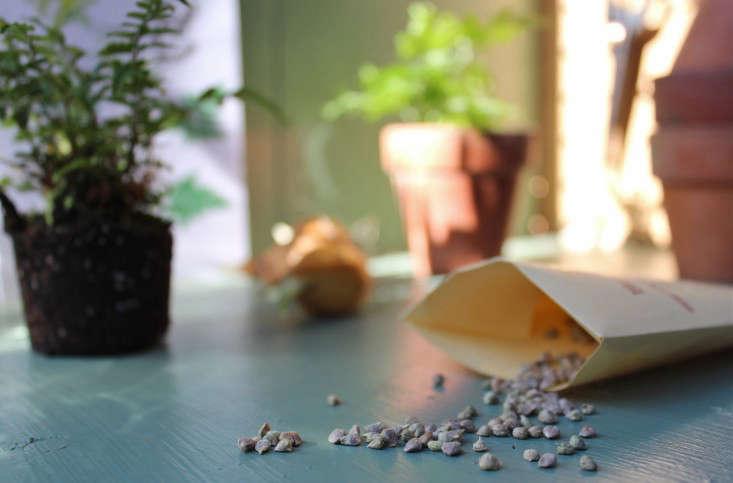 jardin-heirloom-seeds-broccoli-2-gardenista