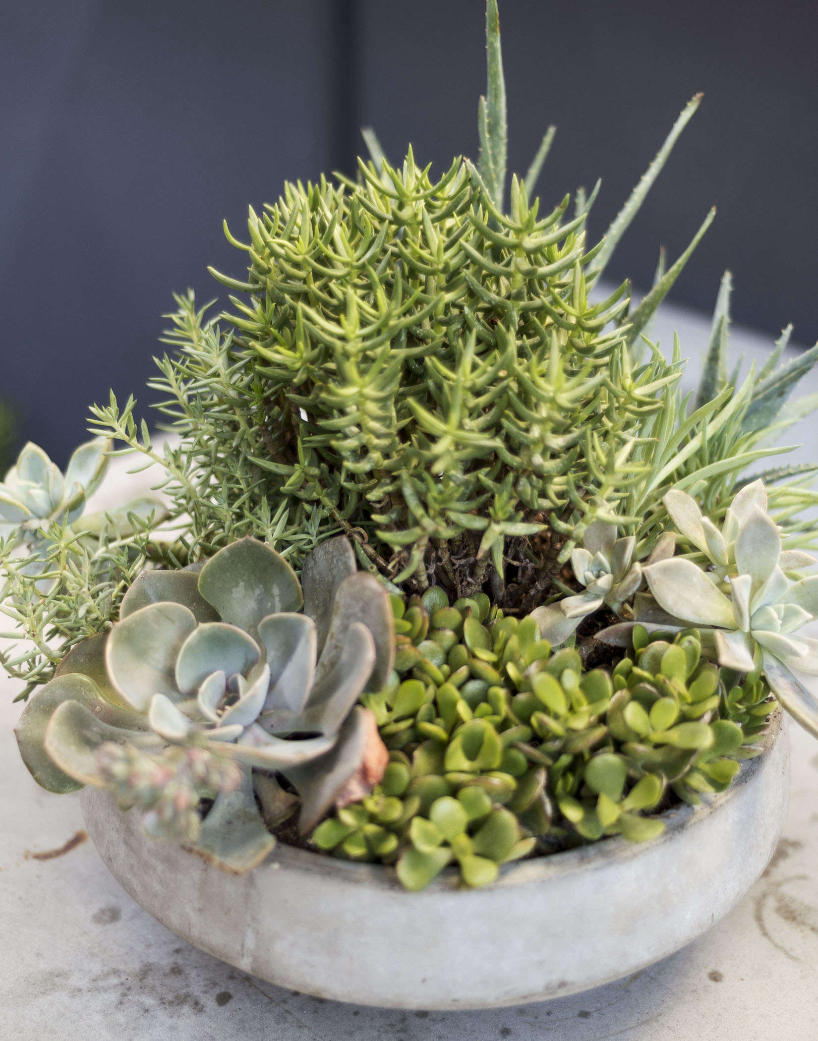klein-garden-mission-san-francisco-gardenista-succulents-container