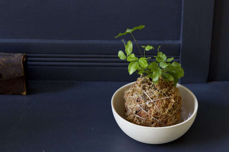 Kokedama string ball hanging planter by Erin Boyle