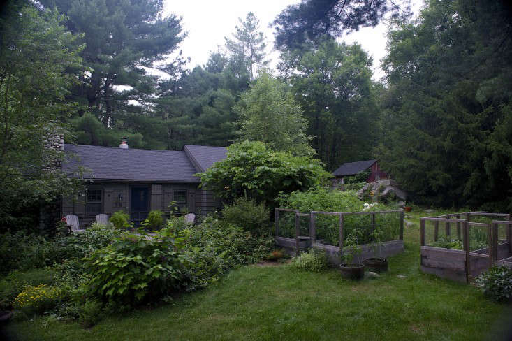 Our modest half-acre is surrounded by tall pines that rob us of precious sunshine. We began our garden with a couple of raised beds in the back. Those have now quadrupled and spread to the front as well, maximizing our growing area.