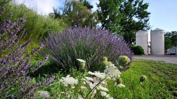Landscaping Ideas: 11 Lavender Gardens Around the World ...