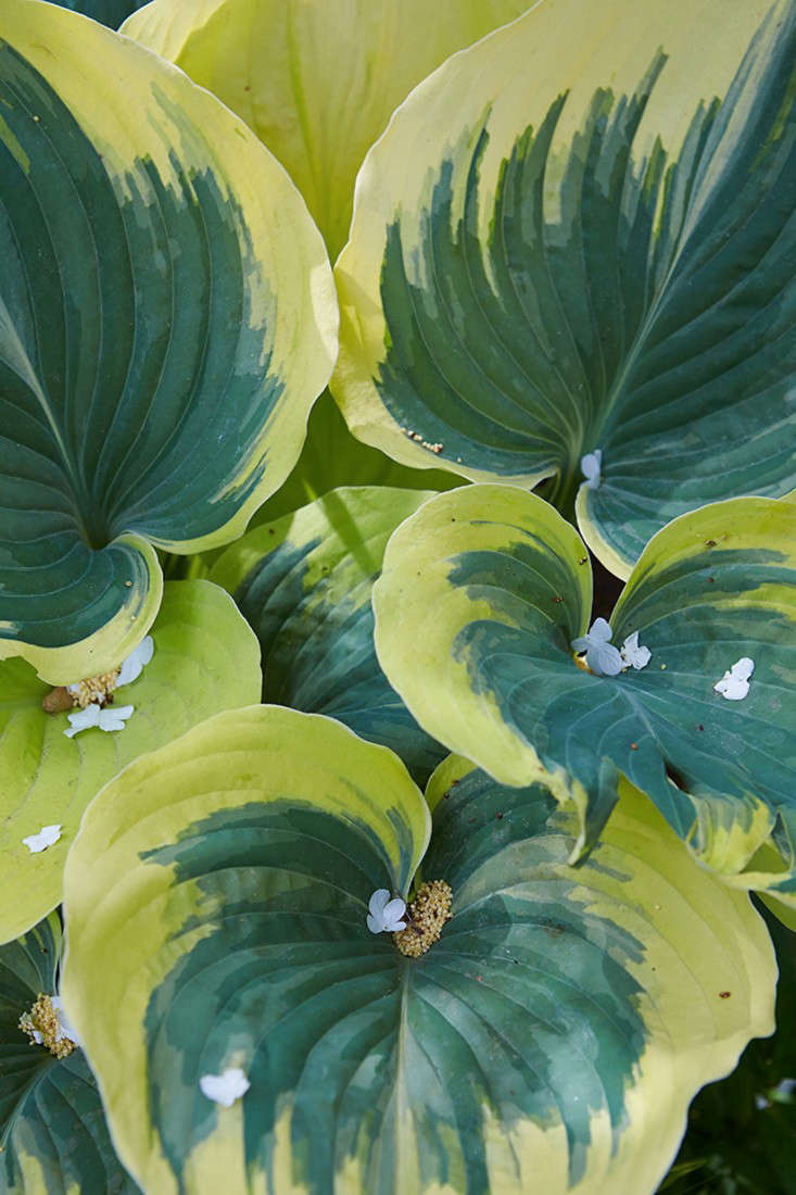 marjorie-harris-toronto-garden-gardenista-21