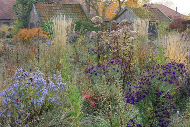 Grasses form a matrix around colorful purple asters in Oudolf&#8