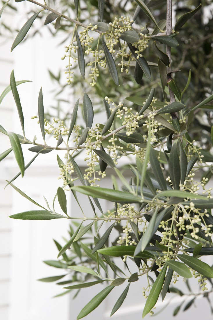 mediterranean-garden-linsteadt-14-gardenista