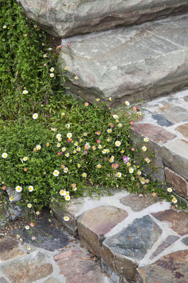mediterranean-garden-linsteadt-15-gardenista