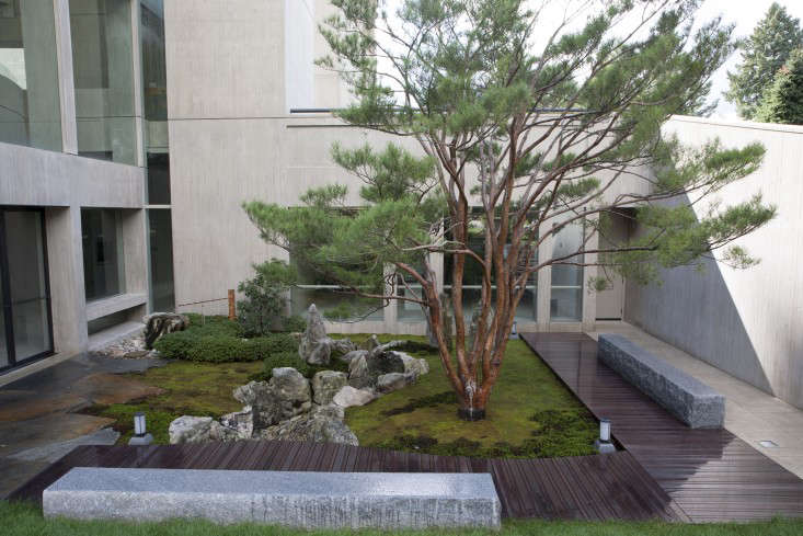 A wide shot of the courtyard garden. The Japanese red pine shows off its well-pruned and maintained structure. The wooden walkways are made from Ipe.