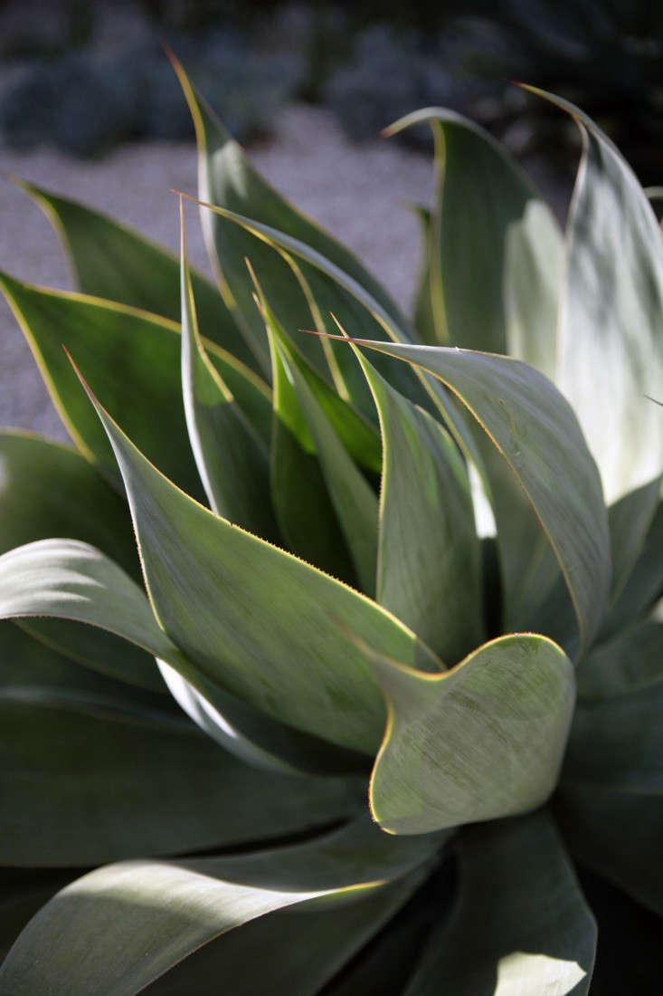 An agave in the courtyard.
