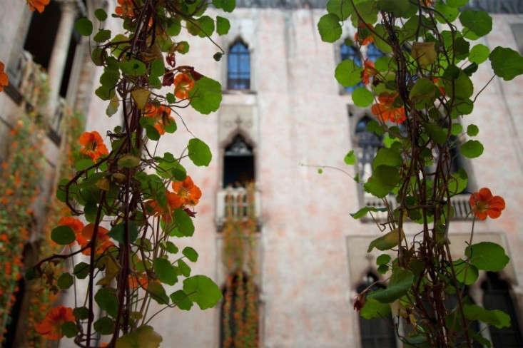 nasturtium-vines-siena-scarf-isabella-stewart-gardener-museum-gardenista