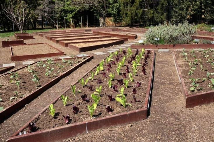Lettuce seedlings in raised beds in the White House garden in early spring during the Obama administration. Photography via Obama Foodorama, from  Garden Ideas to Steal from Michelle Obama.
