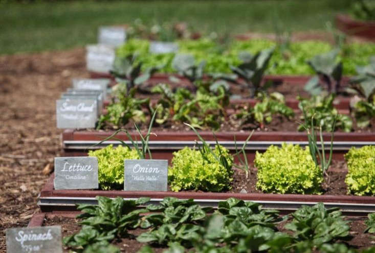 Former First Lady Michelle Obama is down with cool-season crops. Her White House kitchen garden provided fresh vegetables year-round. Photograph via Obama Foodorama, from  Garden Ideas to Steal from Michelle Obama.