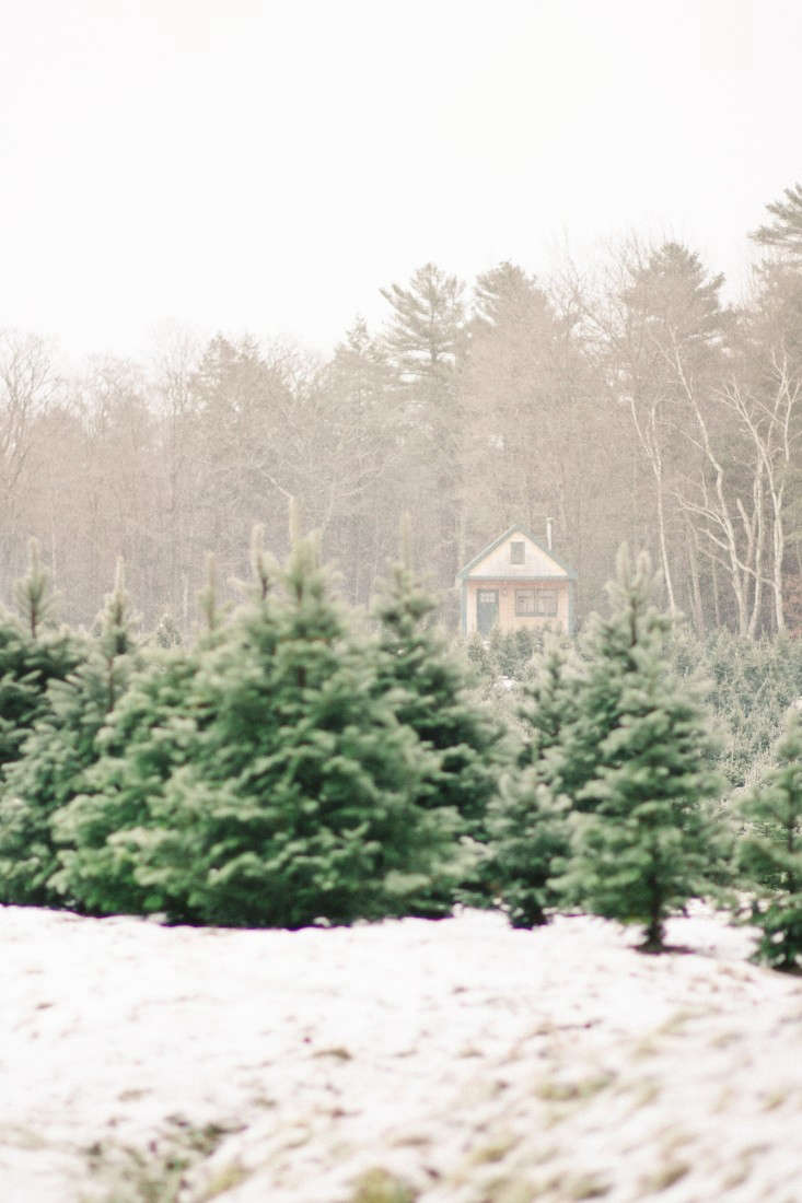 &#8\2\16;Tis the season for bundling up to source the perfect Christmas tree—or just a brisk winter walk in the woods. PhotographbyJustina Bilodeau fromShopper's Diary: A Christmas Tree Farm in Maine.