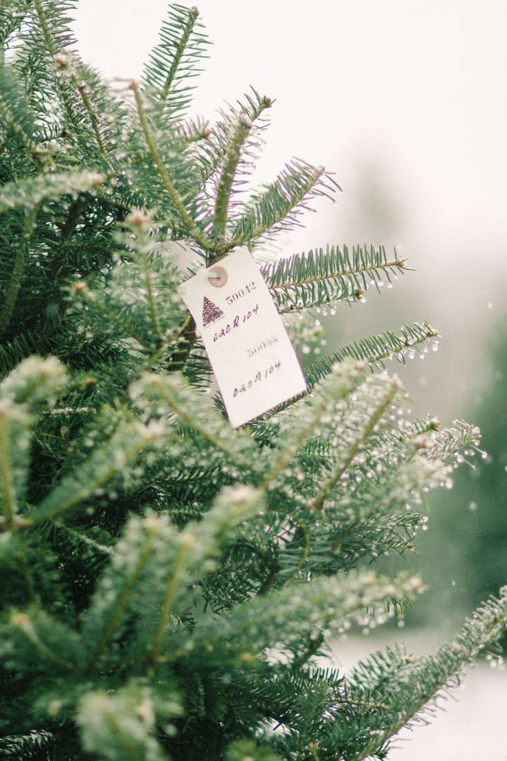 See more at The Old Farm Christmas Tree Place in Maine. Photograph by Justina Bilodeau.