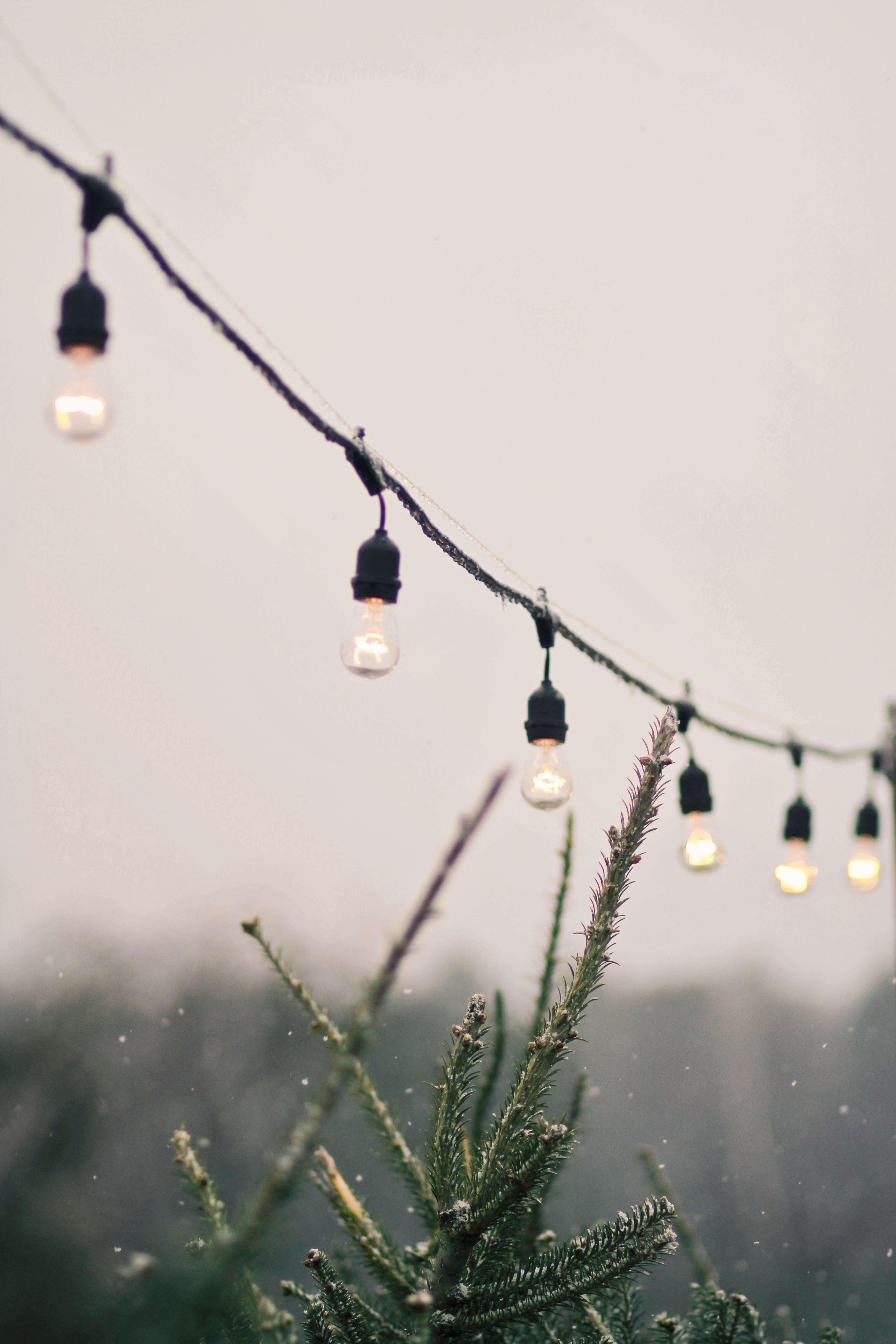 old-farm-christmas-tree-farm-Justina-Bilodeau-gardenista-0087