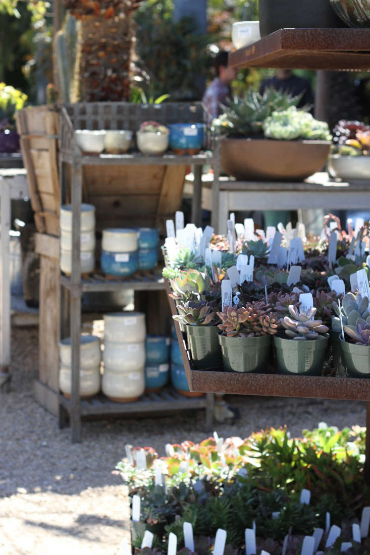 Succulent plants and succulents at Flora Grubb in San Francisco