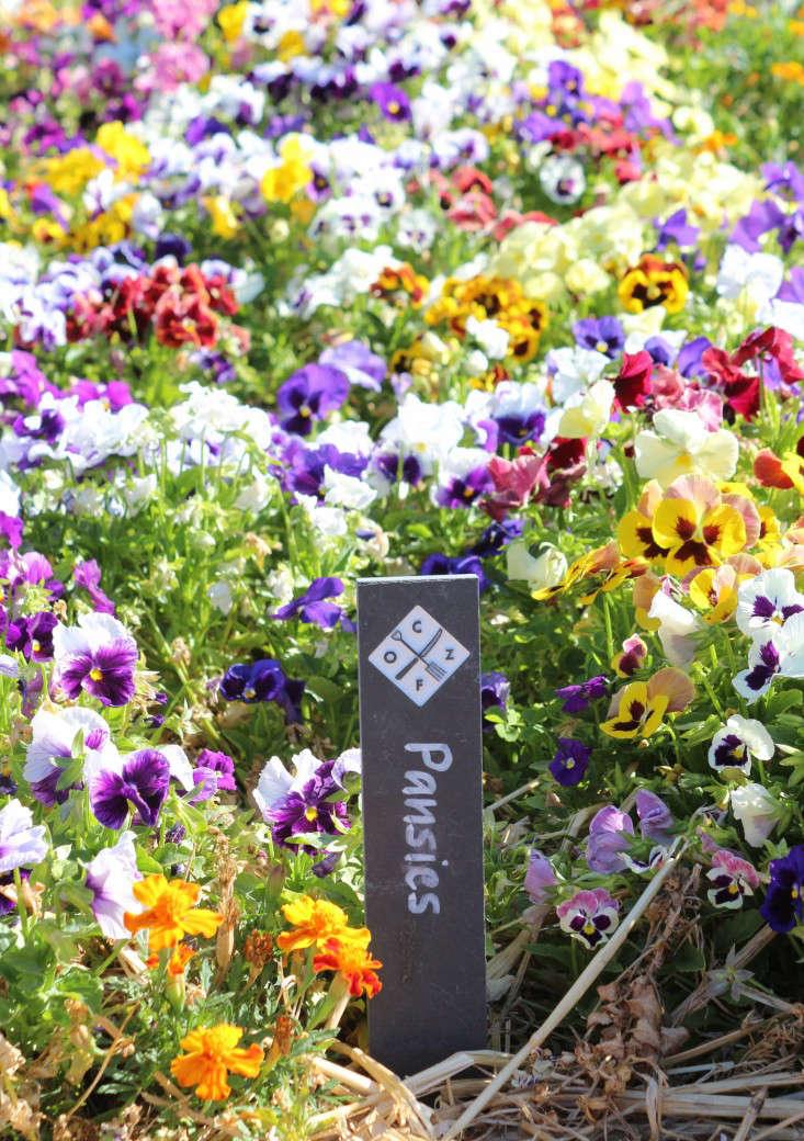 pansies-oranjezicht-city-farm-gardenista