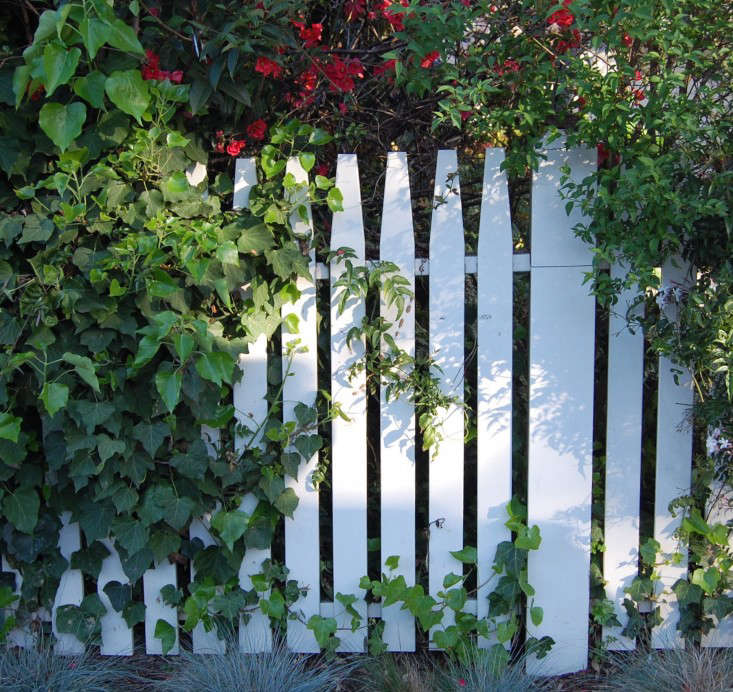 picket-fence-white-gardenista