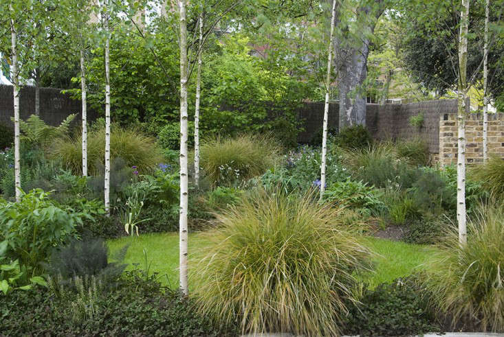 Silver birch has been called in to add a light canopy. Trees that already existed were sycamore, robinia and an old hawthorn: &#8