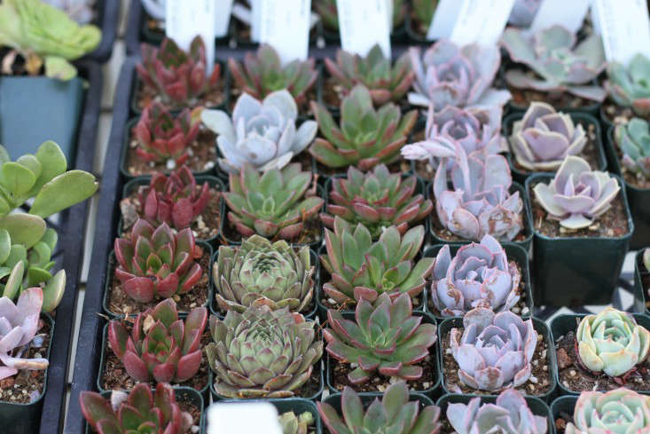 Part of the appeal is the variety of colors and shapes. But succulent plants in the purple and orange color family are really better suited for outdoor spaces.