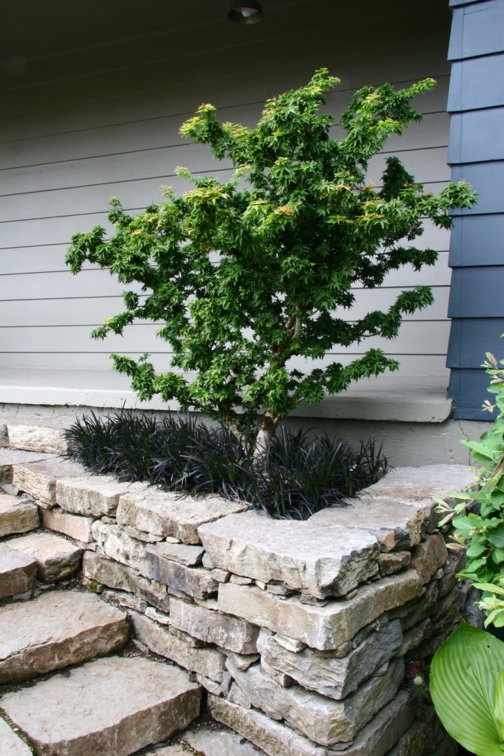 A dry-stack basalt stone wall and stone staircase create a garden bed for a sculptural tree, underplanted with black mondo grass. See more in Rehab Diary: A Garden Makeover for a Ranch-Style House in Oregon.