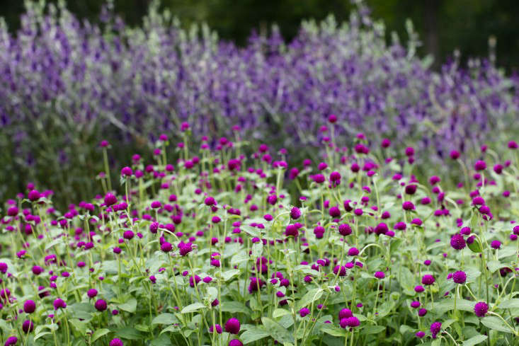 Photograph by Christine Chitnis for Gardenista. For more, see Garden Visit: Robin Hollow Flower Farm in Rhode Island.
