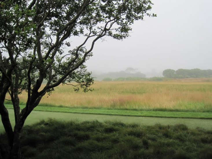 A meadow of red fescue grass creates a hazy, romantic focal point in the distance.