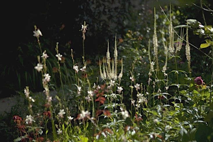 sam-mcknight-london-garden-jim-powell-gardenista-12