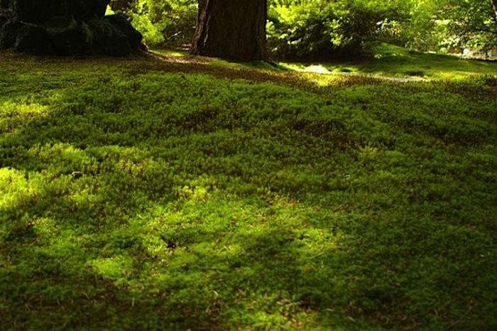 Janet has investigated alternatives to water-guzzling turf. For more, seeFields of Green: 5 Favorite Lawn Substitutes, including Sheet Moss for shady spots; \$\24.99 for five square feet from TN Nursery.