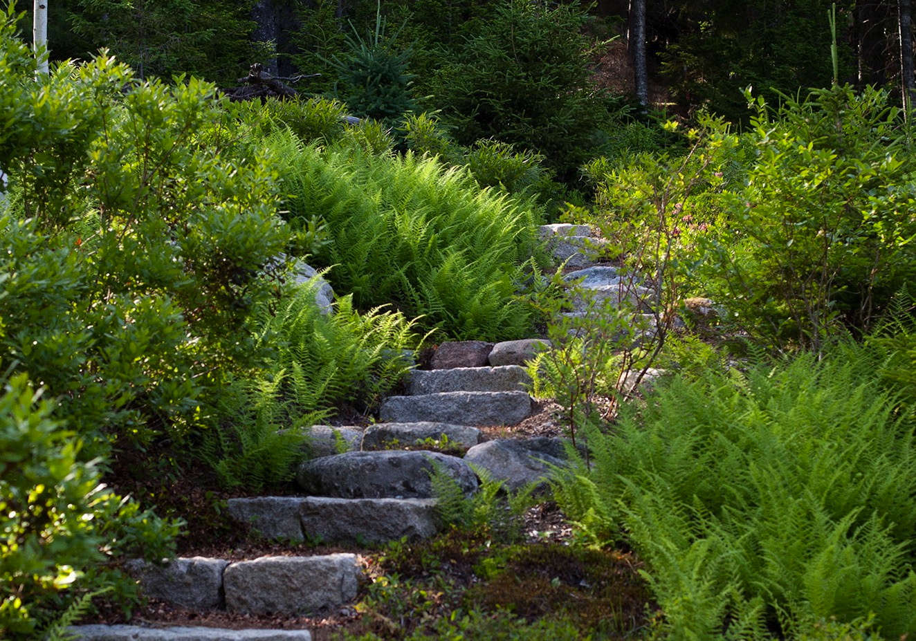 Granite stairs bordered by ferns are cut into the hillside.