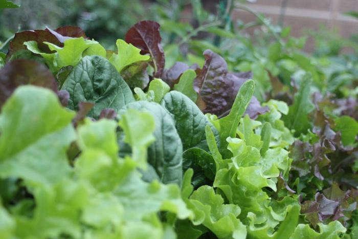 spinach_walnut-hill-gardenista