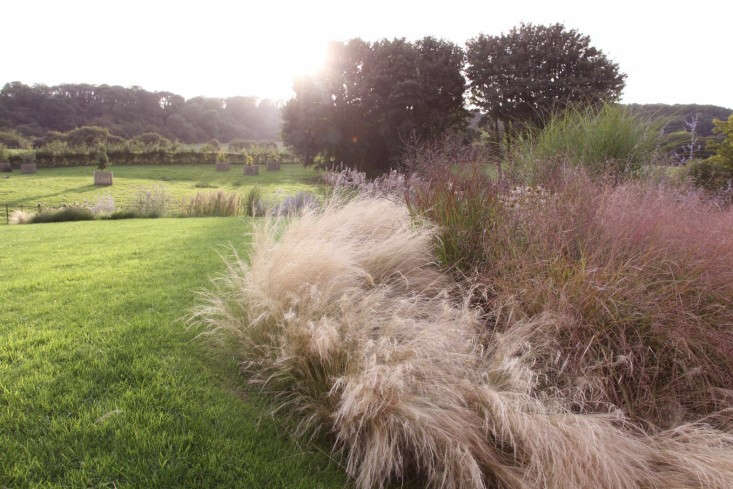 Stipa tenuissima (Mexican feather grass or Nassella tenuissima) features bursts of feathery panicles, which change from foamy green to blonde. Photograph courtesy of Robert Kennett, from Gardening loading=