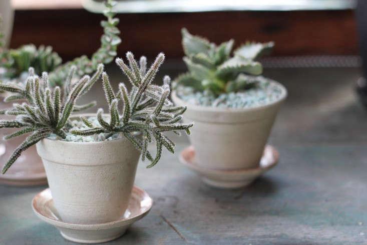 succulents-solabee-gardenista
