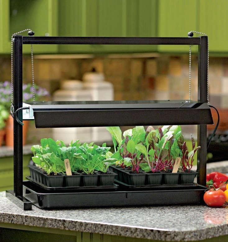 tabletop-grow-lights-gardenista