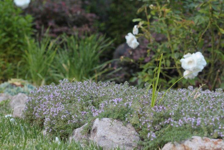 thyme-in-the-garden-gardenista