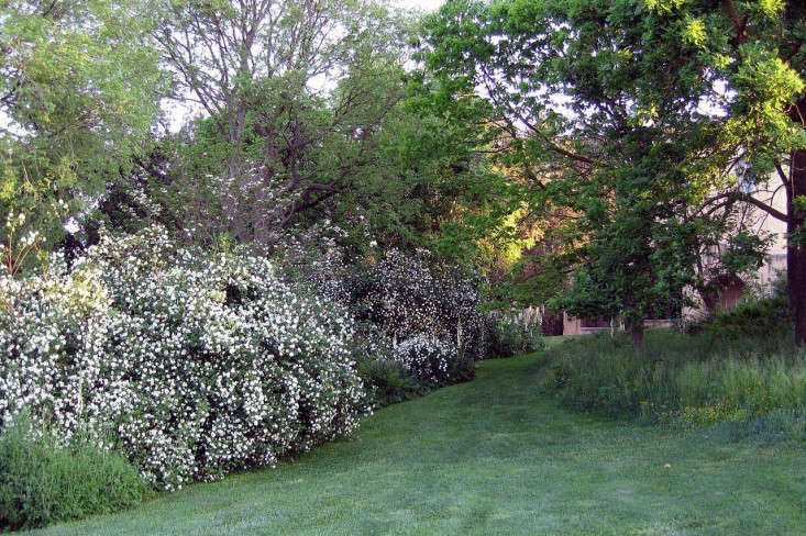 torecchia-ital-garden-dan-pearson-gardenista-1.jp5_
