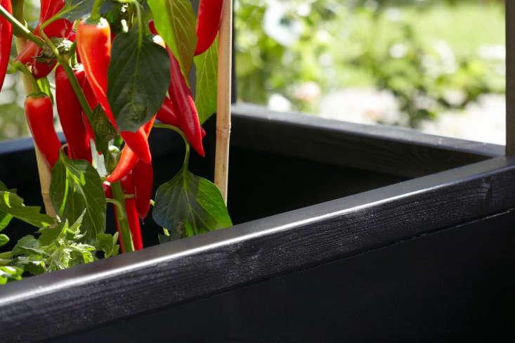 urban-greenhouse-gardenista